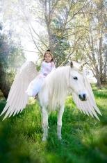CEC_3015 wings